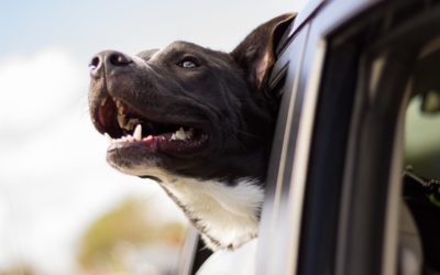 Have a Dog-Friendly Summer in OCNJ